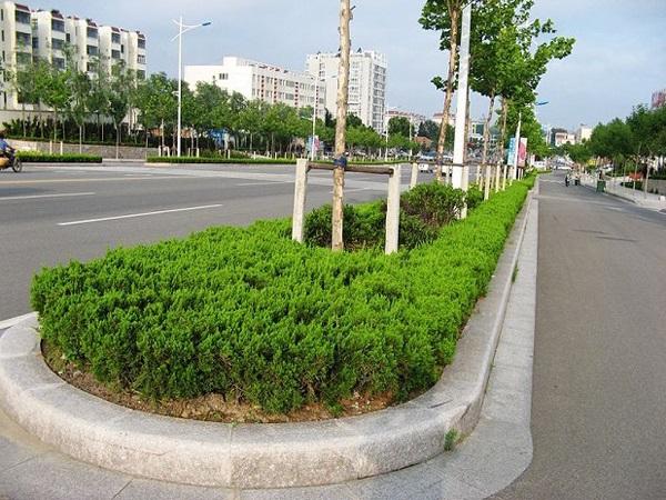 五莲红路沿石工程案例